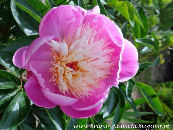 Brilhos da Moda: Flores, uma maravilha da natureza # 34
