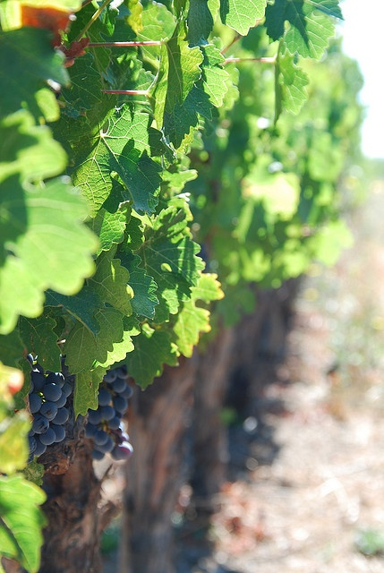Napa, California wine is world-renowned and the biggest US producer of American wine
