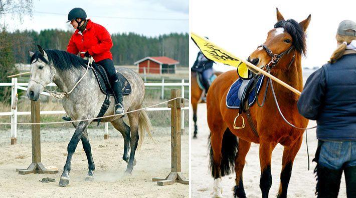 Släpp kontrollen och få en modigare häst