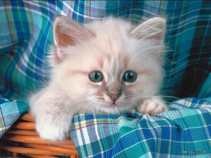 496 best images about ♥ Cute Fluffy Animals ♥ on Pinterest ...