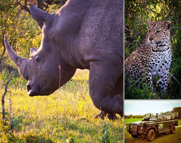 On Safari in Kruger National Park, South Africa | Vagabondish