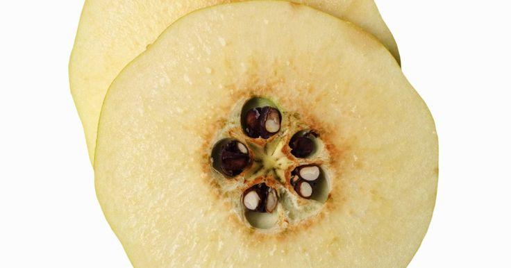 Cómo comer un membrillo. El membrillo es una fruta que crece en el Oriente Medio, en Asia, en el Mediterráneo, en América Latina y en los Estados Unidos. El membrillo maduro es de color amarillo y se asemeja a sus más conocidos familiares, la manzana y la pera. El membrillo tiene un sabor ácido y amargo en su forma cruda, por lo que la mayoría de la gente no los recoge ni ...
