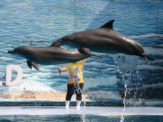 Dolphin Show at Safari World in Bangkok, Thailand