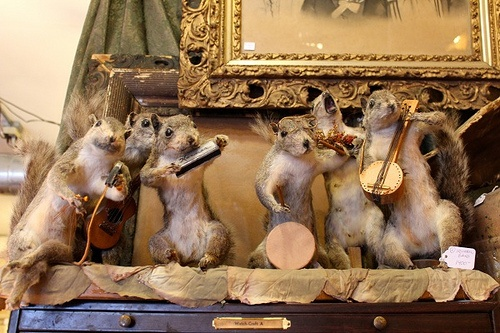 Mátame, camión! (El Tópic de la Taxidermia Chunga) - Página 3 2646237553876be6ea298fcb9c68df5e--taxidermy-squirrels
