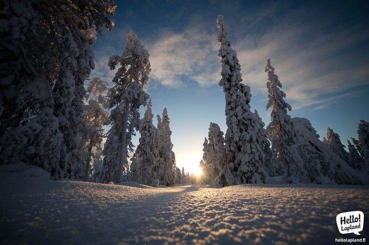 January scenery on top of Ounasvaara fell in Rovaniemi, Lapland, Finland.