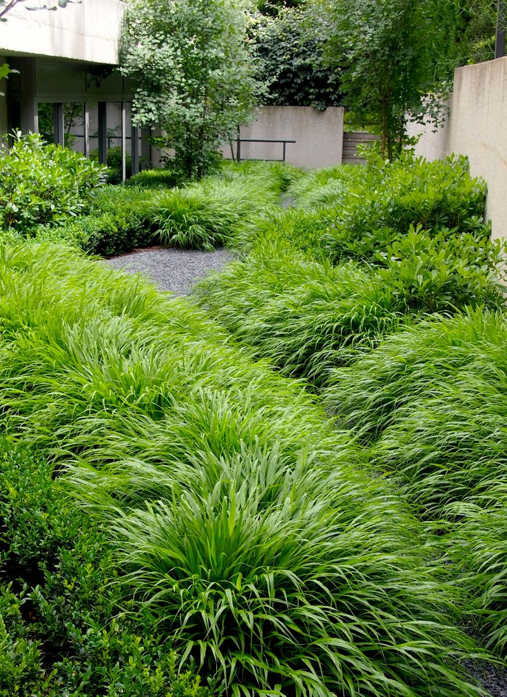 Hakonechloa Macra. Jardín Aravaca Paisajismo Miguel Urquijo www.urquijokastner.com