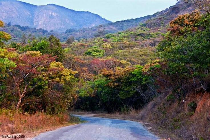 Vumba road -Eastern Highlands, Zimbabwe