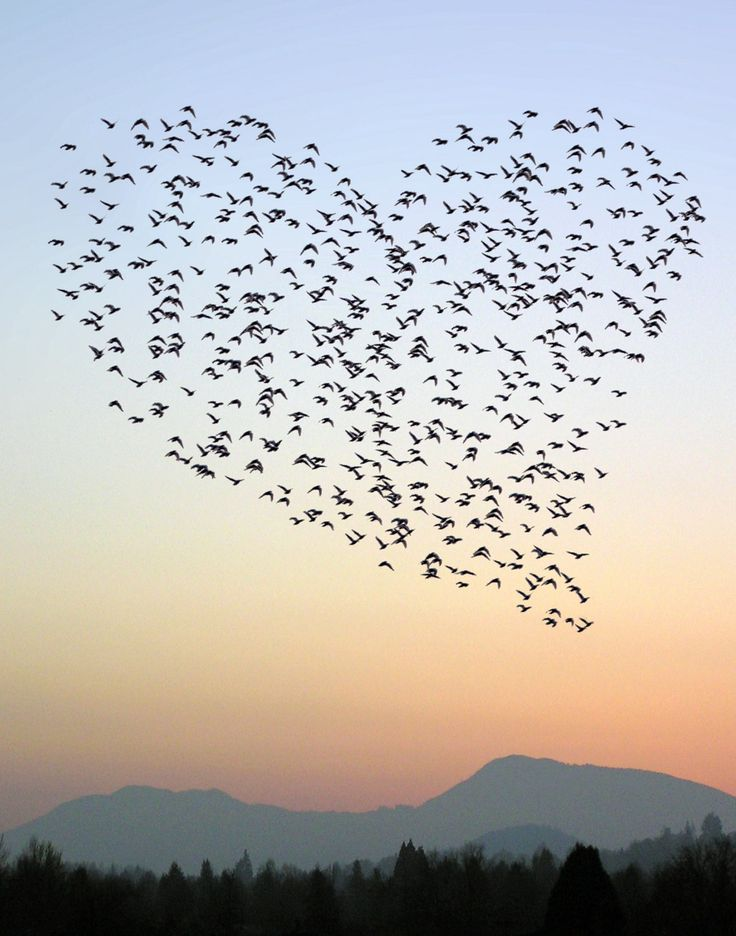 All sizes   Heart Flock   Flickr - Photo Sharing!