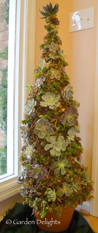 Growing a Succulent Christmas Tree @Garden Delights