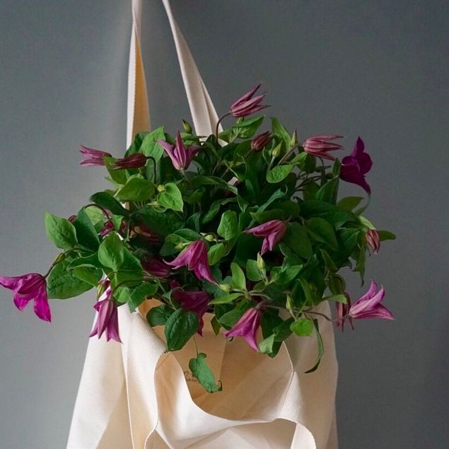 Bagging bunches of local clematis today. <3 #russianriverflowerschool #clematis
