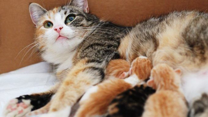 5 Reasons A Mother Cat Might Abandon Or Reject Her Young Cattime Cat Birth Cat Having Kittens Sleeping Kitten