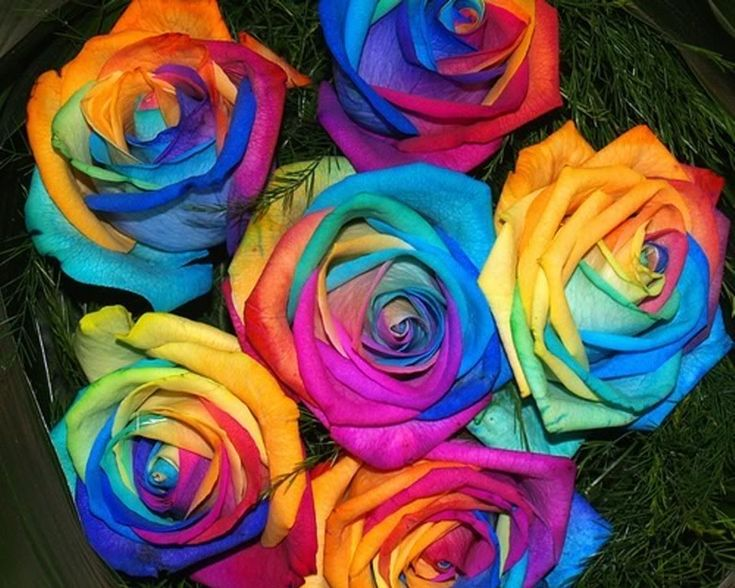 17 best images about random colorful things on pinterest for Order tie dye roses online