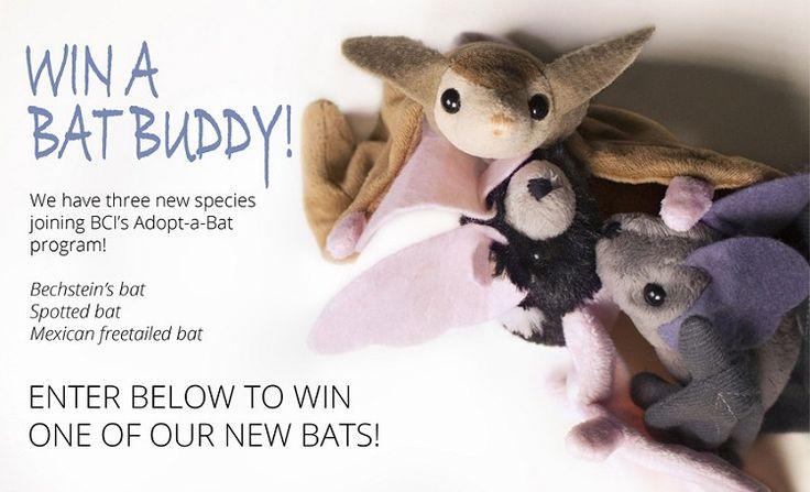 WIN a CUTE BAT from Bat Conservation International #BatWeek #Bats #Halloween