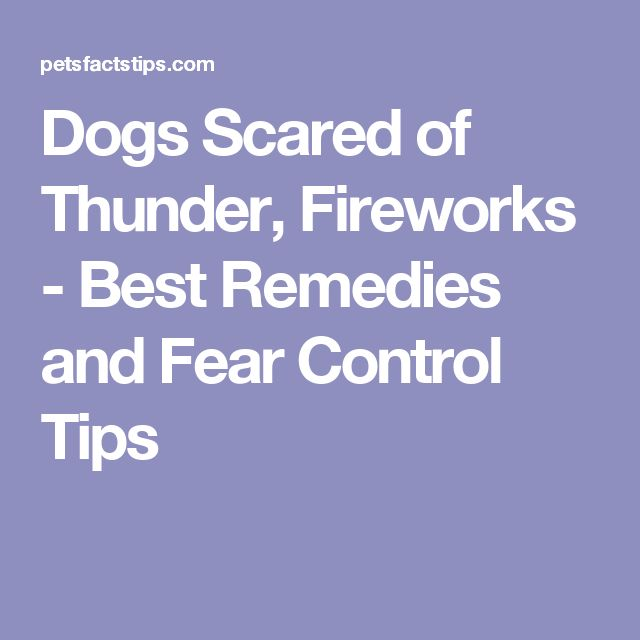 Best 25 Dog Scared Of Fireworks Ideas On Pinterest Dogs