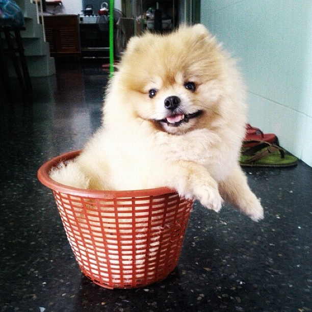Pom Outgrows Basket