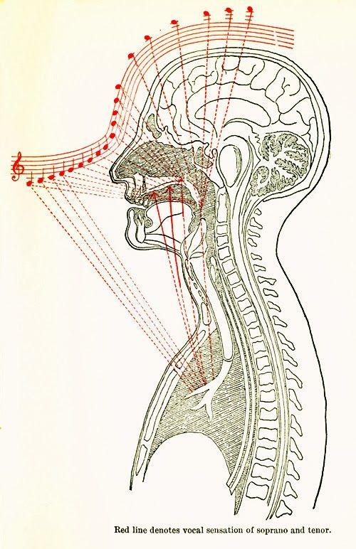 Vocal production