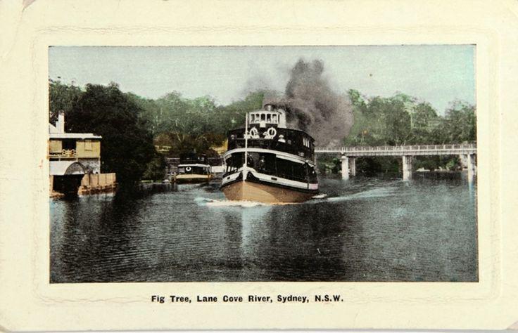 Fig Tree Lane Cove