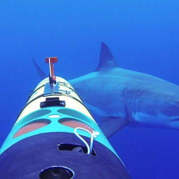 SWIM WITH THE SHARKS thanks to the REMUS SharkCam!