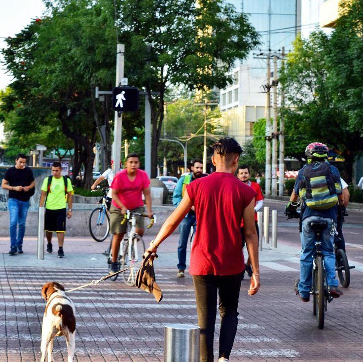 # Guadalajara #Dog #Mascota