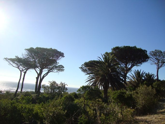 you will not miss any nature at Camps Bay