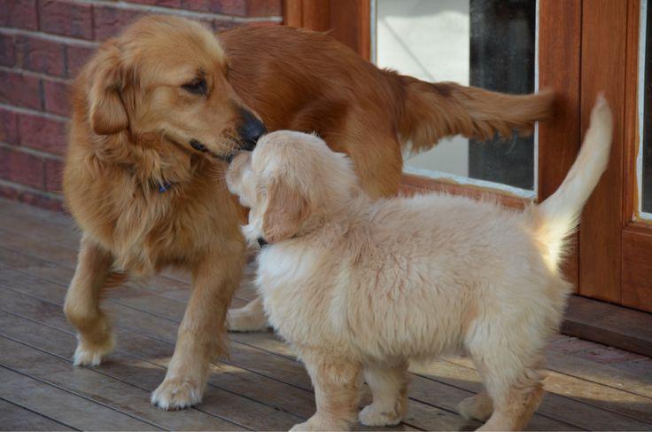 Cutie doggies
