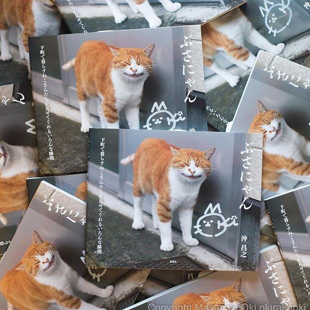 サイン入りの ねこ写真集 ぶさにゃん さん。 2014年のお正月から2015年の夏ごろまで撮り続けたの ねこ写真のベスト盤。 ぜったい、かわいい!  ご希望でしたら 国内に限り送料込みで1600円でお送りいたしますので、 気軽にご連絡くださいませ。  #cat #ねこ #ぶさにゃん