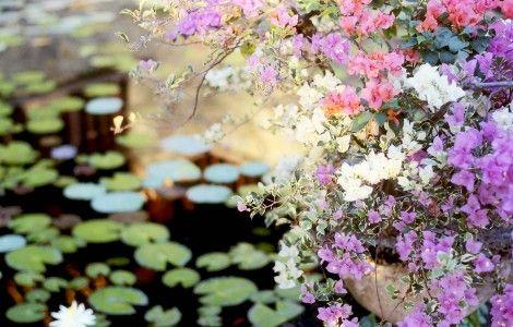 Water Garden, Bali Flower Wallpaper