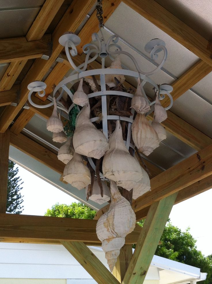 Conch shell chandelier