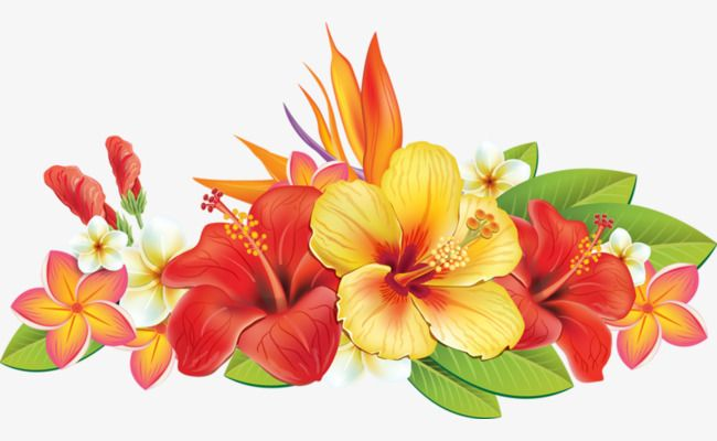 Hand Painted Hibiscus Red Yellow Hibiscus PNG Transparent Clipart Image  and PSD File for Free Download  Flower painting Flower art Flower png  images