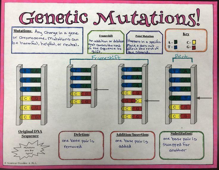 Genetics Mutations Graphic Notes Genetics Biology Classroom Genetics Activities