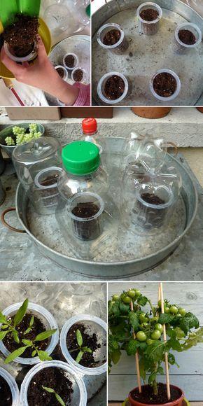 Une activité facile pour les enfants, planter des tomates - Grandir avec Nathan