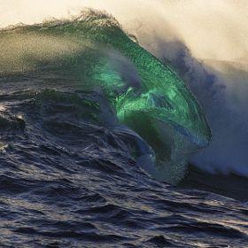 Ocean Mammal by William Patino