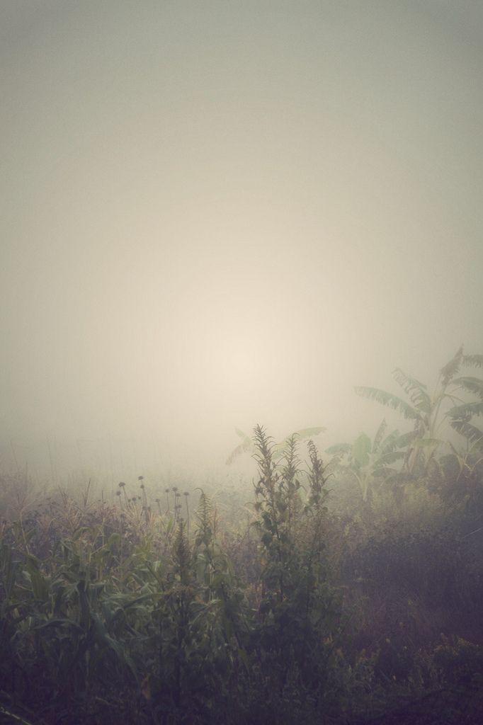 Meadow by Ana Gonzalez