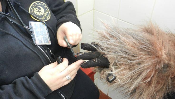 Manicure para un Wookie
