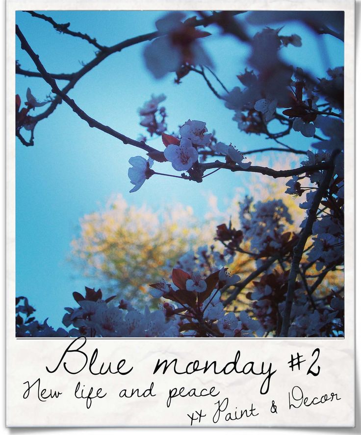 With the start of a new season, it is as if new breath is flooding stale lungs, puncturing old ideas - let this Blue Monday bring you new inspiration, be positive, I hope that peace finds you. #bluemonday #two #blossoms xx Paint & Decor DIY