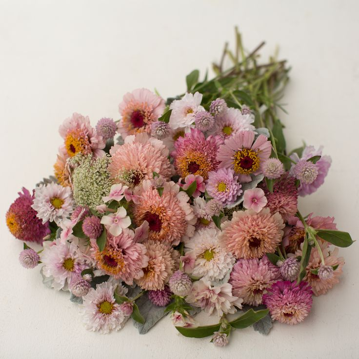 Sweetheart-Mix_Cosmos 'Double Click' Dusty Miller 'New Look' Globe Amaranth Pastel Mix Phlox 'Blushing Bride' Queen Anne's Lace 'Green Mist' Zinnia 'Zinderella Lilac'