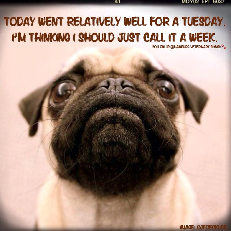 Tuesday humor | Good day | Great day | Animal humor | Dog ...