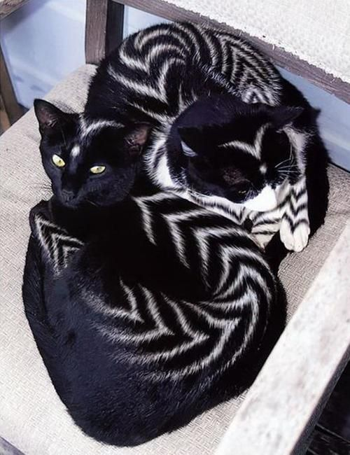 cats with unusual patterns, stripes, creative pet grooming ideas