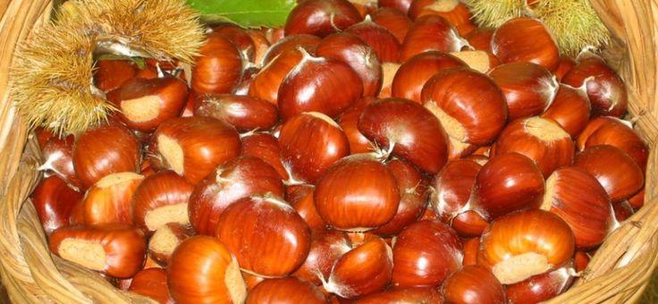 """Castagna rossa del #Cicolano - ad #Ascrea (RI), #Lazio, caratteristico borgo sul Lago del #Turano, i castagneti abbondano di questa varietà e in particolare nel suggestivo """"Bosco dell'Obito""""."""