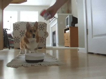 """Every single time you see food. 