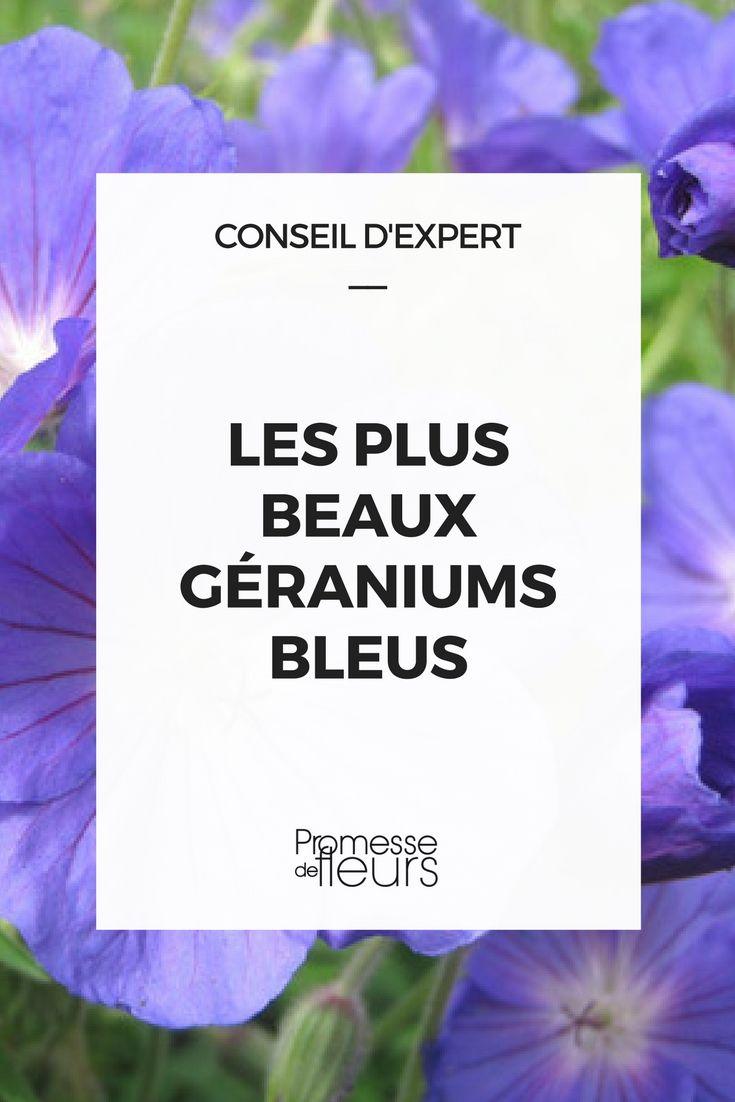 Les plus beaux géraniums vivaces à fleurs bleues : notre sélection #geranium #vivace #bleu