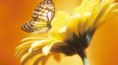 Reflexões em Poesia: PARA VIVER SEM TRISTEZA - VIVER A VIDA