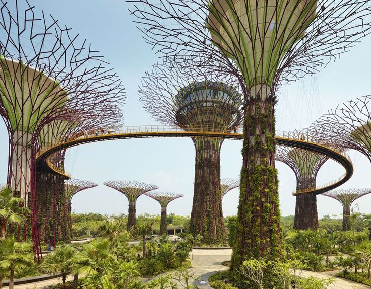 Supertree Grove, Gardens by the Bay, Singapore. This Garden is located across from the Marina Bay Sands hotel. https://www.google.ca/maps/place/Supertree+Grove/@1.2816721,103.859641,16z/data=!4m5!3m4!1s0x31da19030a47894f:0xc974a469e9c48096!8m2!3d1.2816667!4d103.8640184