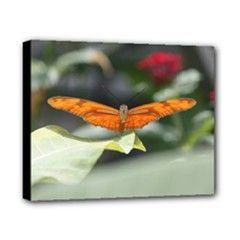 Resting Butterfly Canvas 10  x 8  (Stretched) from Custom Dropshipper