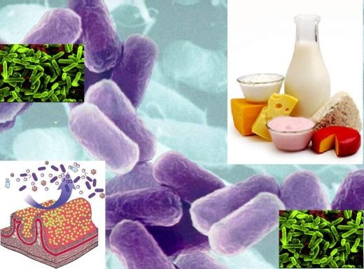Some of the benefits in using probiotics are better utilization of lactose from lactose-intolerant people, its inhibitory effects on colon cancer, lowering of cholesterol and high blood pressure, and improvement in the immune system and the prevention of infection. That is just some of the long list of advantage that people can gain from probiotics.Benefits Of, Immune System, Lactose Intol People, Blood Pressure, Lactose Intolerance People, En Pruebas, 60