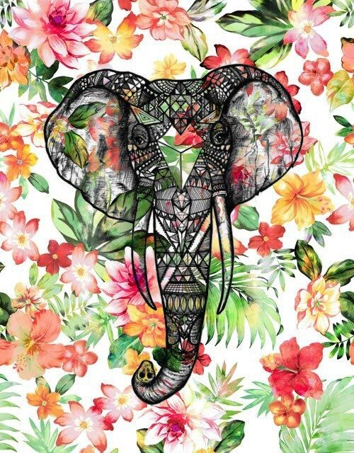 1000 Ideas About Elephant Background On Pinterest