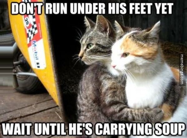 Cats plotting against humans