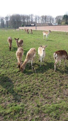 Doe a deer:))