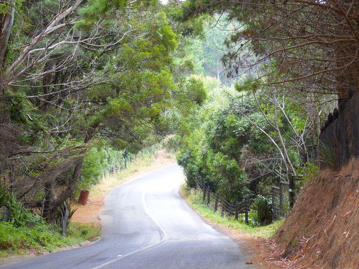 camino a Niebla