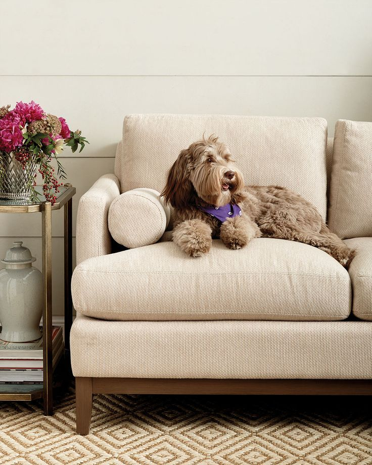 Best Sofas For Dogs Pet Friendly Furniture Pet Friendly Fabric Cool Couches